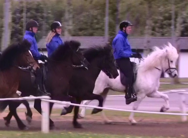 heste-til-salg-forside